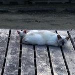 よく似た猫の親子(下津井・祇園神社)